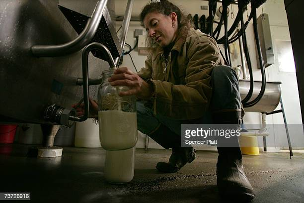 Dairy farmer Lisa Kaiman fills jars of milk on her 33 acre farm March 27 2007 in Chester Vermont Like hundreds of other small Vermont dairy farmers...