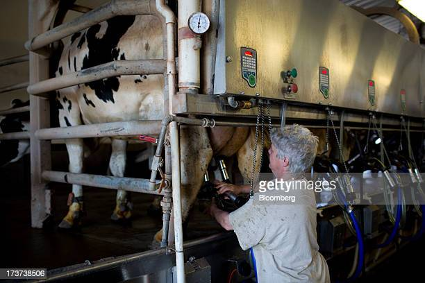 A dairy farmer milks a cow at the Loewith dairy farm in Lynden Ontario Canada on Tuesday July 16 2013 The National Milk Producers Federations Board...