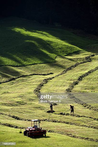 Dairy farmers gathering grass for feed, Sertig Valley.