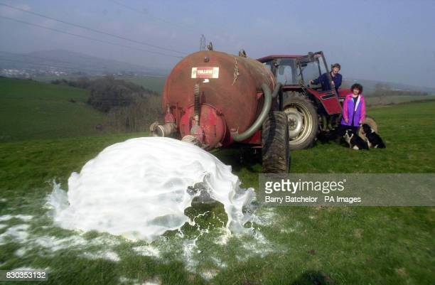 Dairy farmers John Widdicombe and his wife Peggy pour away 900 litres of milk at their farm in Avonwick Devon in protest at the low prices They...