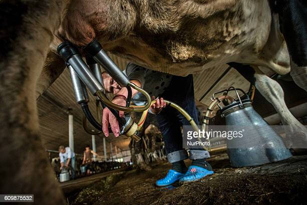 A dairymaid milks a cow at a cowshed in the Nikitin Kolkhoz at Ivanovka village Azerbaijan Ivanovka is a village with mainly Russian population which...
