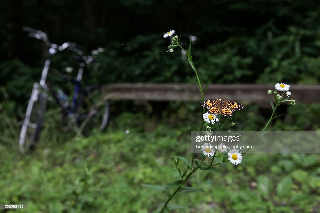Daises with Butterfly on a Bench : Foto de stock
