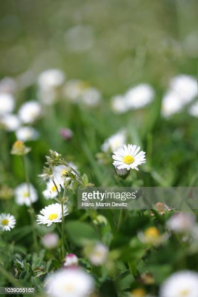 Different Types Of White Flowers Stock Photos And Pictures Getty