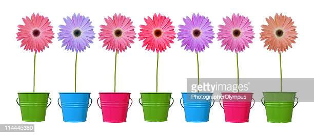daisies in colorful pots xl - gerbera stock pictures, royalty-free photos & images