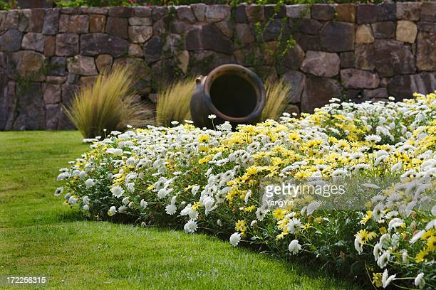 Daisies in Garden with Old Stone Wall, Lawn, Pottery, Grasses