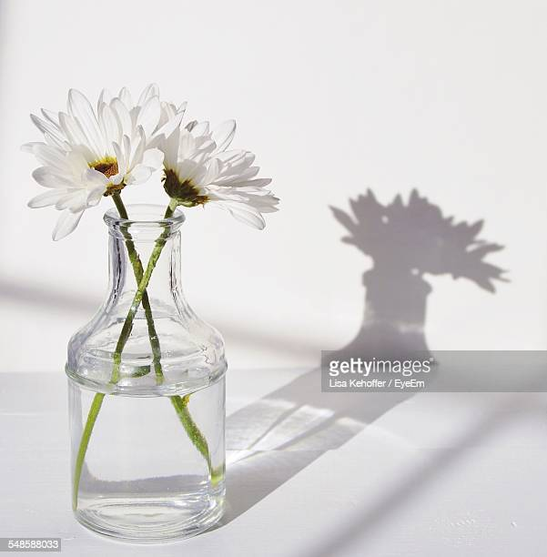 Daisies In Glass Bottle