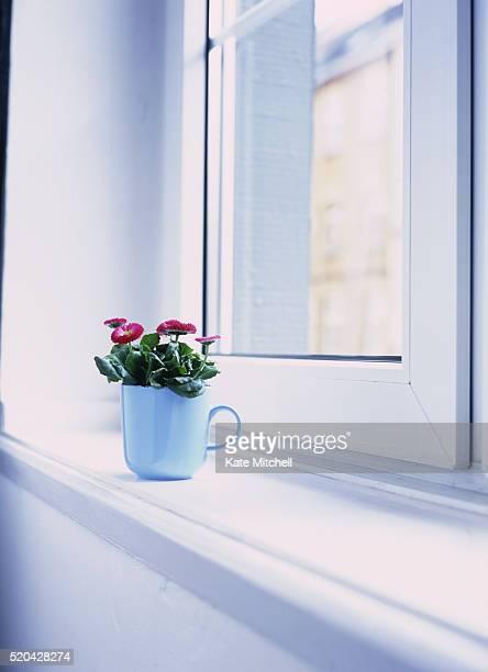 daisies in mug on windowsill - ペア ストックフォトと画像