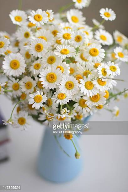 Daisies In A Vase Stock Photos And Pictures Getty Images