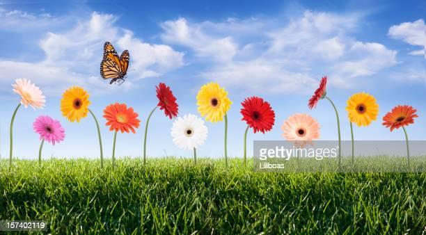 daisies en un cielo azul - primavera estación fotografías e imágenes de stock