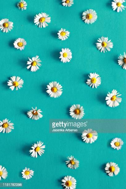 daisy background - デイジー ストックフォトと画像