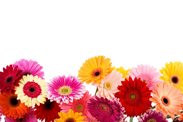 Free Daisy Frame Images Pictures And Royalty Free Stock Photos Freeimages Com