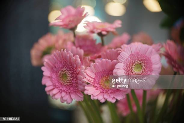 Daisy flowers on beautiful background by lens effect