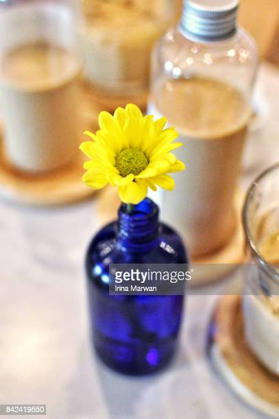 Daisy in a Blue Vase