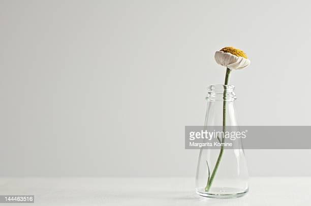 Daisy in a bottle