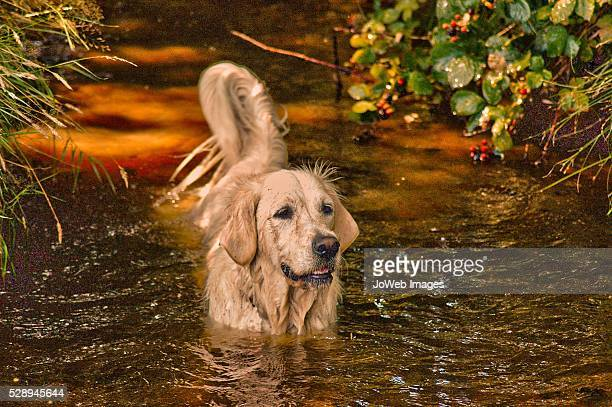 Daisy in the River