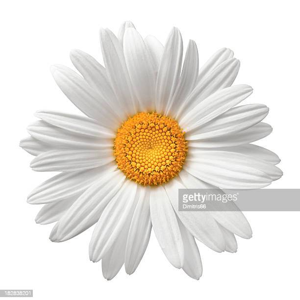 daisy on white with clipping path - flower head stock pictures, royalty-free photos & images