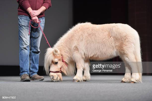 Daisy the horse stands onstage during the 'Damsel' Premiere during the 2018 Sundance Film Festival at Eccles Center Theatre on January 23 2018 in...