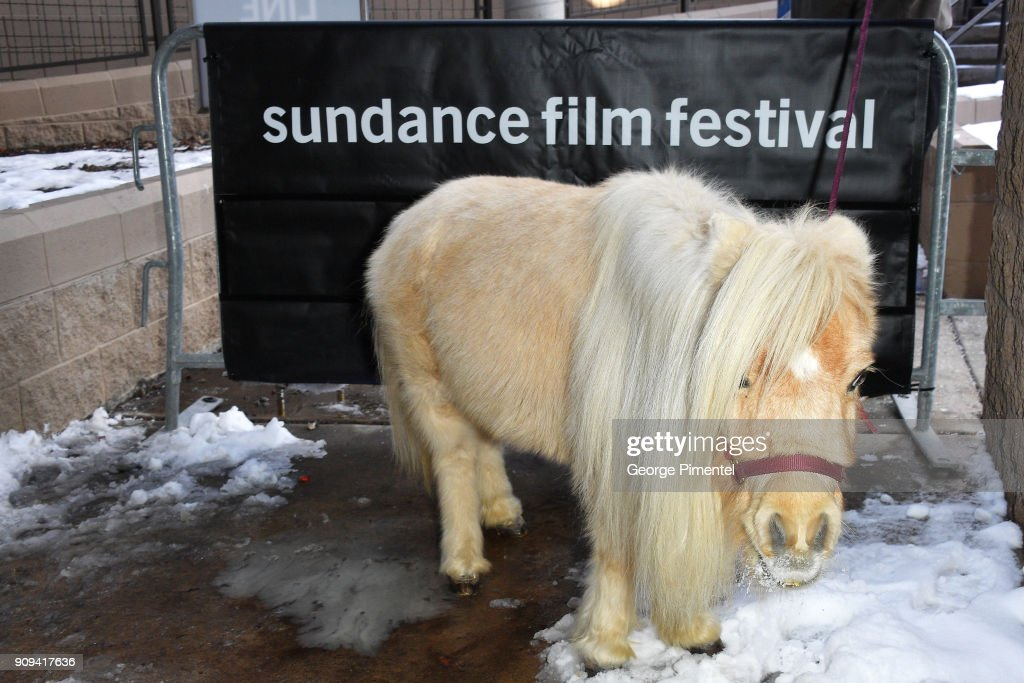 Daisy the miniature horse attends the 'Damsel' Premiere during the 2018 Sundance Film Festival at Eccles Center Theatre on January 23, 2018 in Park City, Utah.