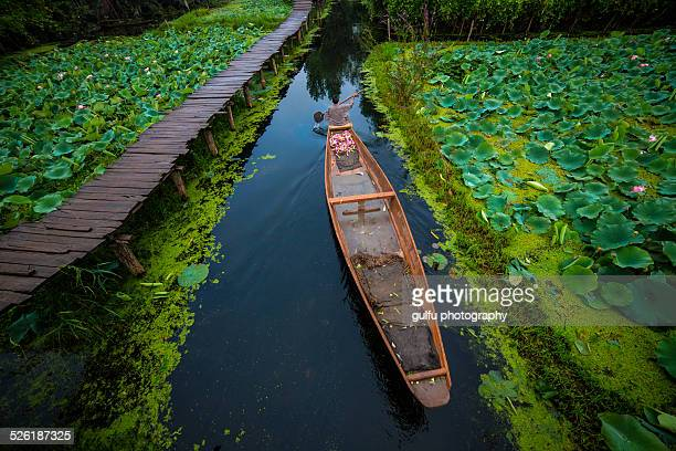 dal lake kashmir - kashmir valley stock pictures, royalty-free photos & images