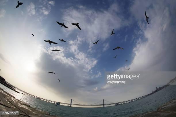Dalian Xinghai Bay Bridge and Seagull
