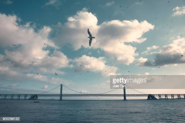 dalian xinghai bridge - bay of water stock pictures, royalty-free photos & images