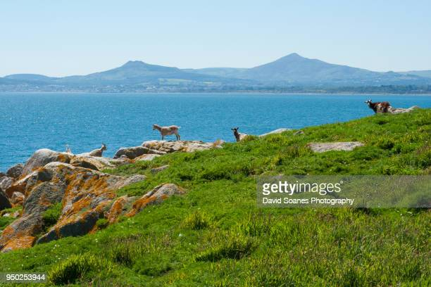 dalkey island in dublin, ireland - dalkey stock pictures, royalty-free photos & images