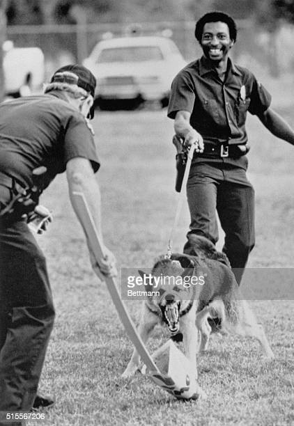 Police officer Donnie Paul works with attack dog named Frank during a crowd control exercise recently Frank is one of nine Dallas dogs trained to...