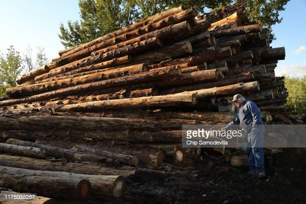 Dallis Hunter, owner of Juice Custom Cutting, looks over a stack of mountain pine beetle-killed pine logs at his outdoor saw mill September 12, 2019...