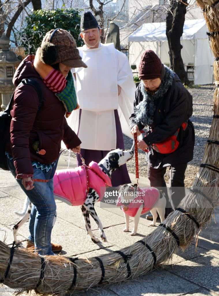 A dalmatian (centre L) and a French bulldog with their owners pass a sacred straw made ring before a purification ceremony performed by a Shinto priest (C) at the Ichigaya Kamegaoka-Hachiman shrine in Tokyo on January 13, 2013. Some 500 pets and their owners visit at the shrine to celebrate for the New Yaer and pray for their animal's health and happiness. AFP PHOTO / Yoshikazu TSUNO