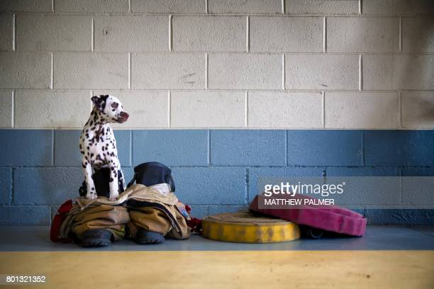 dalmatian at firehouse - fire station stock photos and pictures