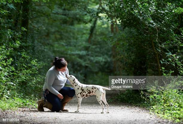 Dalmatian dog and owner out for a walk.