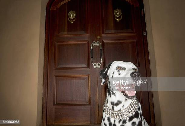 Dalmatian Dog at Entrance Door