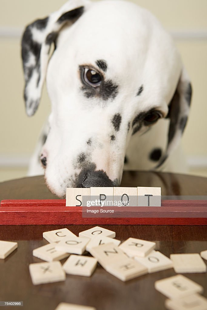 Dalmation and word game : Stock Photo