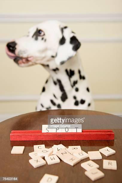 Dalmatinische und Spiel mit Wörtern