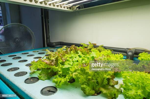 Dalston Lane London Borough of Hackney FARMshop eco and social designdriven urban farm with innovative growing systems using aquaponics and...