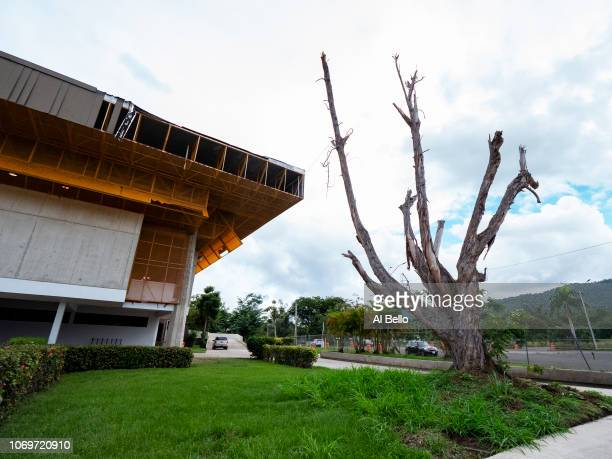 A damaged athletics Building and dead tree caused by Hurricane Maria are shown at the Cayay campus of the University of Puerto Rico on November 10...
