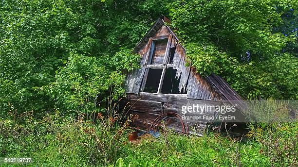 Damaged House In Forest