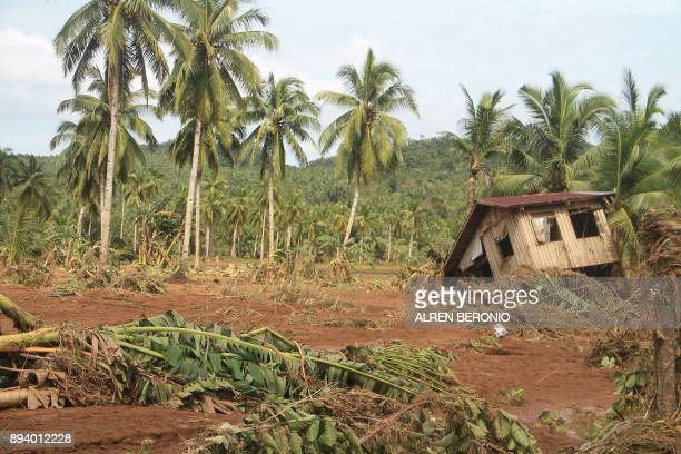 TOPSHOT A damaged house is seen past felled banana trees in Barangay San Mateo Borongan in eastern Samar on December 17 after Tropical Depression...