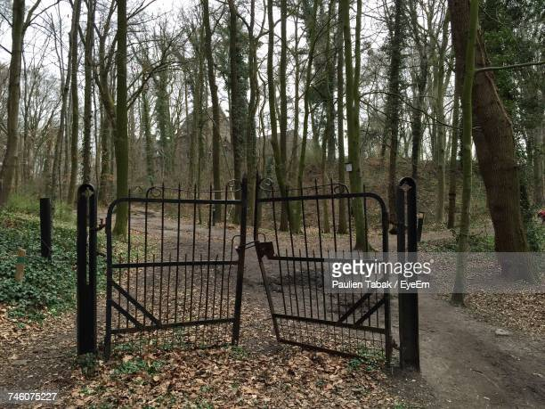 Damaged Metallic Gate On Road In Forest