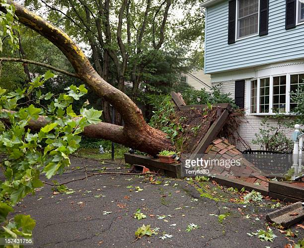 damaged sidewalk from fallen tree uprooted by tornado - fallen tree stock pictures, royalty-free photos & images
