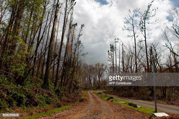 Damaged trees at the entrance of the closed El Yunque National Forest affected by the passing of Hurricane Maria is seen in Luquillo Puerto Rico on...
