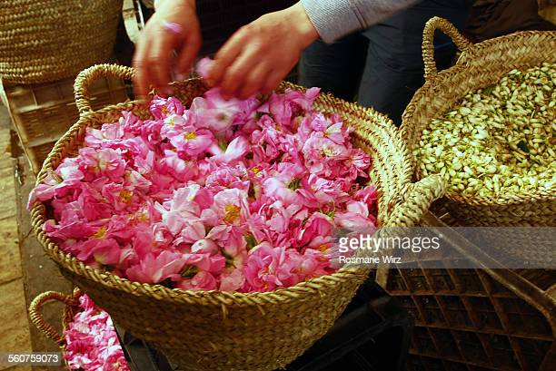 Damask roses and jasmine buds