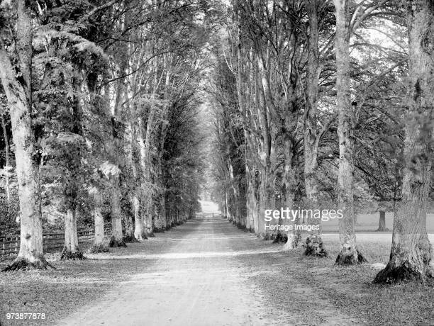 Dames Avenue Highclere Castle Hampshire circa 1860circa 1922 View looking down the avenue towards a gate in the park Artist Henry Taunt