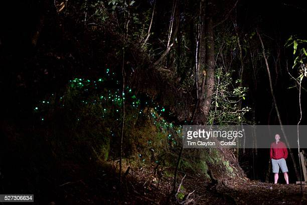 60 Top Glow Worms Pictures, Photos and Images - Getty Images