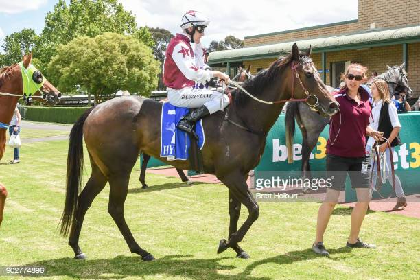 Damian Lane returns to the mounting yard on Avanti Rose after winning the Hargreaves Hill Brewery Class 1 Handicap at Yarra Valley Racecourse on...
