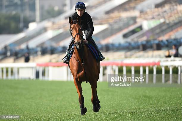 Damian Lane riding Big Orange of Great Britain during a trackwork session at Sha Tin Racecourse on December 8 2016 in Hong Kong Hong Kong