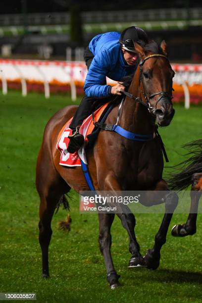 Damian Lane riding Probabeel during a trackwork session ahead of the All Star Mile, at Moonee Valley Racecourse on March 09, 2021 in Melbourne,...