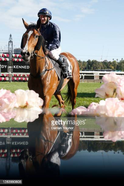 Damien Oliver on board Personal returns to scale after winning race 8 the Kennedy Oaks during 2020 Kennedy Oaks Day at Flemington Racecourse on...