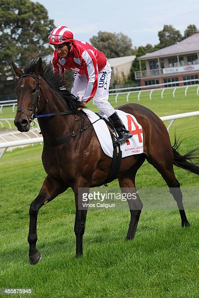 Damien Oliver riding Belle Couture after winning Race 2 the Elvis Thurgood 34th Anniversary Plate during Melbourne Racing on April 21 2014 in...