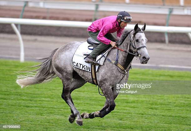 Damien Oliver riding Catkins during a trackwork session at Flemington Racecourse on October 28 2014 in Melbourne Australia